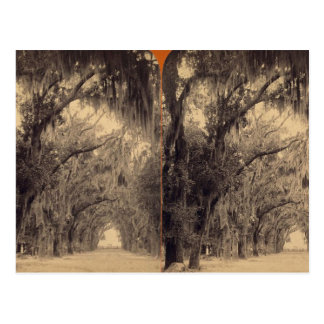 Bonaventure Cemetery, Savannah, Ga c. 1887 Postcard