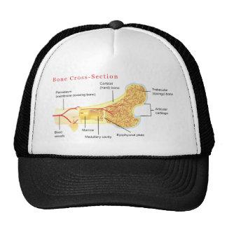 Bone Cross Section Diagram Hats