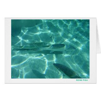 Bone Fish Card