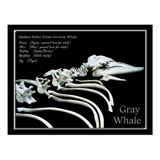 Bones of an Alaskan Grey Whale Postcard