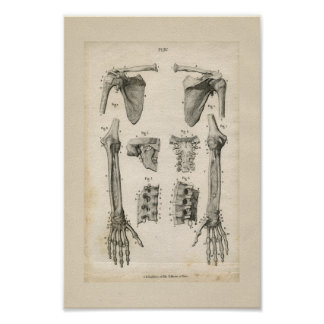 Bones of the Arm Vintage Anatomy Print