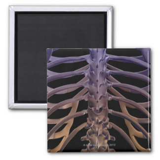 Bones of the Back Square Magnet