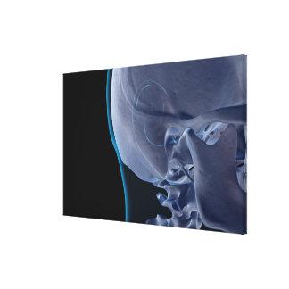 Bones of the Face Canvas Print