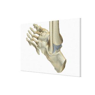 Bones of the Foot 10 Canvas Print