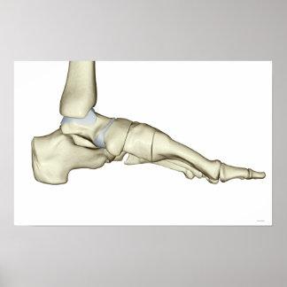 Bones of the Foot 10 Poster