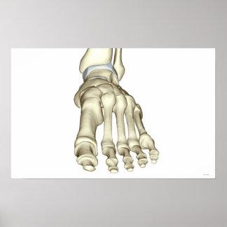 Bones of the Foot 11 Poster