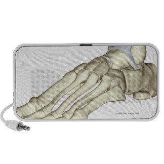 Bones of the Foot 13 Travel Speaker