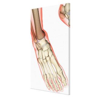 Bones of the Foot 14 Canvas Print