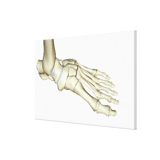 Bones of the Foot 15 Canvas Print