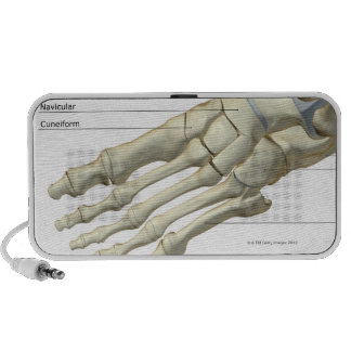 Bones of the Foot 15 iPhone Speaker