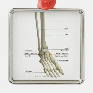 Bones of the Foot 6 Christmas Ornament
