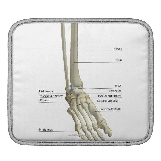 Bones of the Foot 6 iPad Sleeve