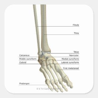 Bones of the Foot 6 Square Sticker