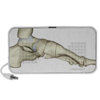 Bones of the Foot 7 Laptop Speaker
