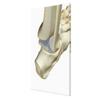 Bones of the Foot 8 Canvas Print