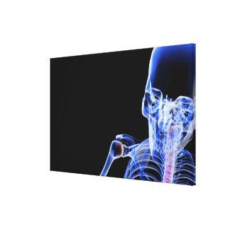 Bones of the Head 2 Canvas Print