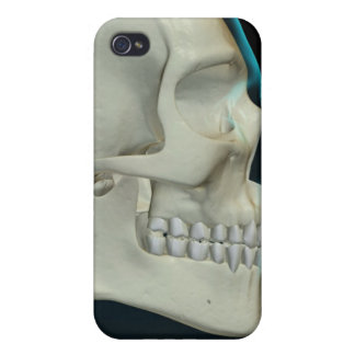 Bones of the Head and Face 2 Covers For iPhone 4