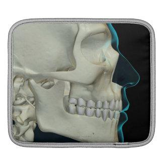 Bones of the Head and Face 2 iPad Sleeve