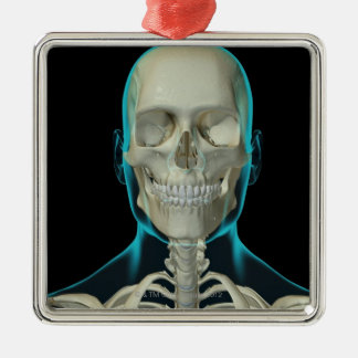 Bones of the Head and Neck 2 Christmas Ornament