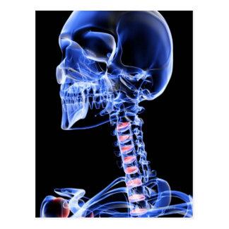 Bones of the Head and Neck 7 Postcard