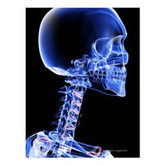 Bones of the Head and Neck Postcard