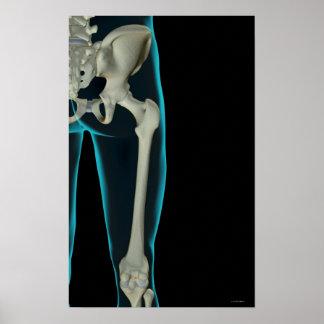 Bones of the Hip 2 Poster