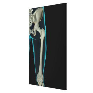 Bones of the Hip Canvas Print