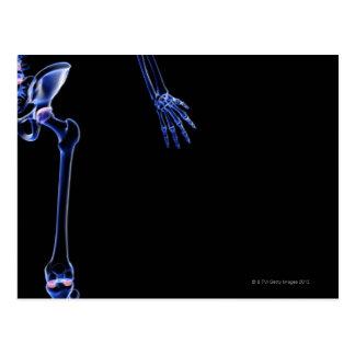 Bones of the Hip Postcard