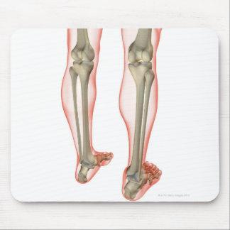 Bones of the Leg 3 Mouse Pad