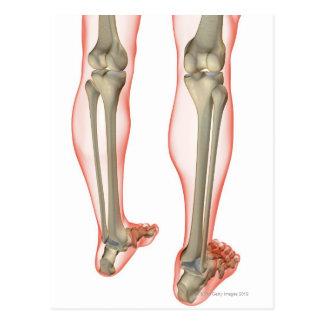 Bones of the Leg 3 Postcard