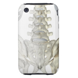 Bones of the Lower Back 3 iPhone 3 Tough Cover