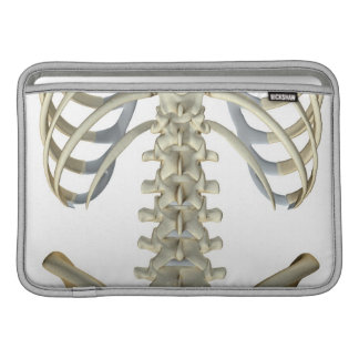 Bones of the Lower Back 4 MacBook Sleeve