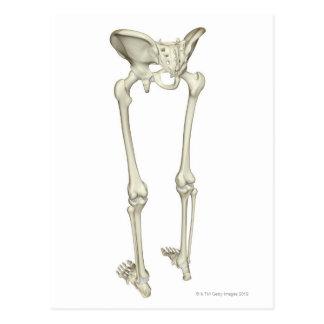 Bones of the Lower Body 5 Postcard
