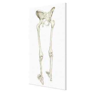 Bones of the Lower Body Canvas Print