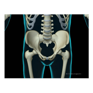 Bones of the Lower Body Postcard