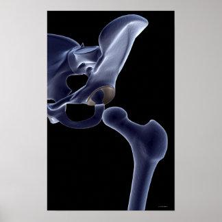 Bones of the Pelvis Poster