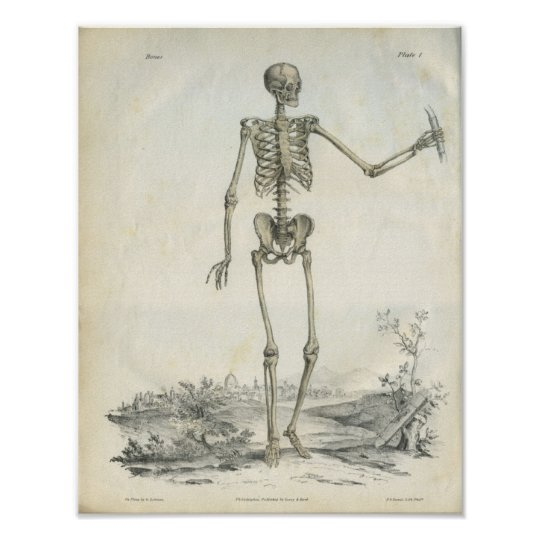 Bones of the Skeleton Art Print