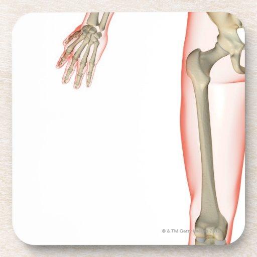 Bones of the Thigh Beverage Coaster