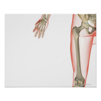 Bones of the Thigh Posters