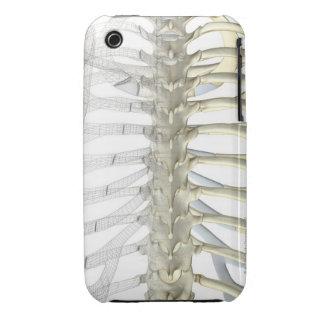 Bones of the Thoracic Vertebrae 2 Case-Mate iPhone 3 Cases