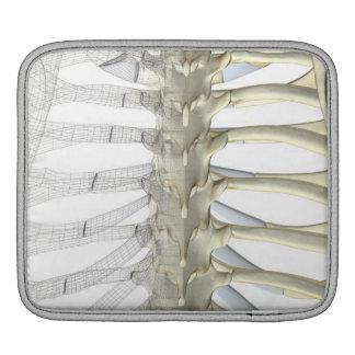 Bones of the Thoracic Vertebrae 2 iPad Sleeve