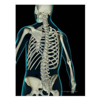 Bones of the Upper Body 2 Postcard