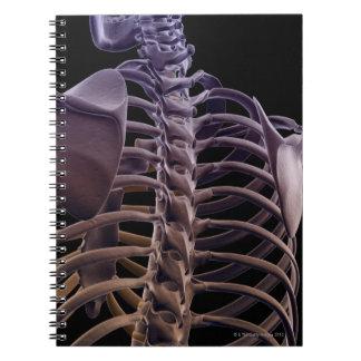 Bones of the Upper Body 4 Notebooks