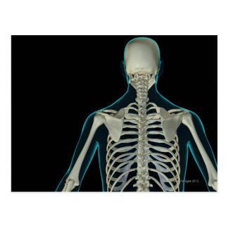 Bones of the Upper Body 5 Postcard