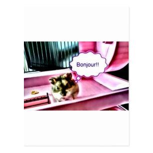 Cute Hamster Postcards Zazzle Uk
