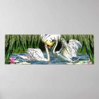 Bonny Swans Sunrise Poster