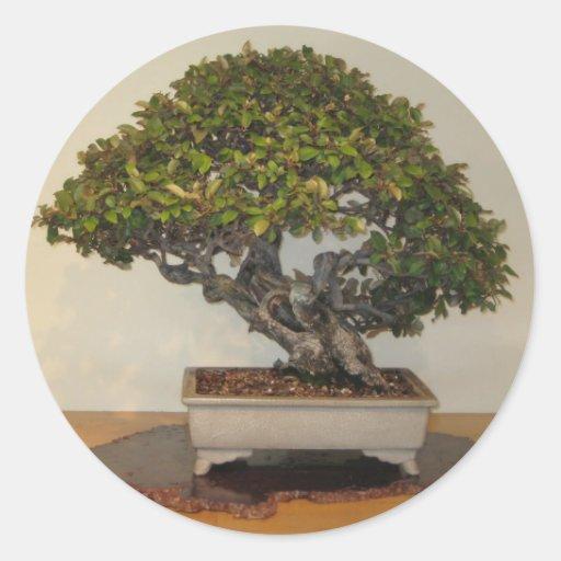 Bonsai at National Arboretum, Washington D.C. Sticker