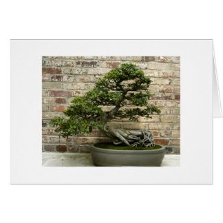 Bonsai at Phipps Conservatory Note Card