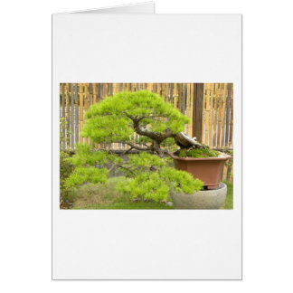 Bonsai/Chinese Potted Landscape Greeting Card