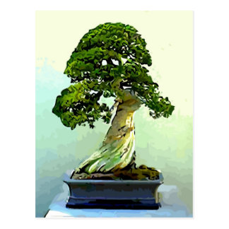 Bonsai Cypress Tree Postcard
